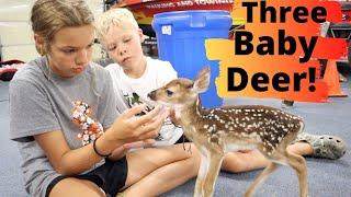 Pet Deer Had Triplets! Super RARE!