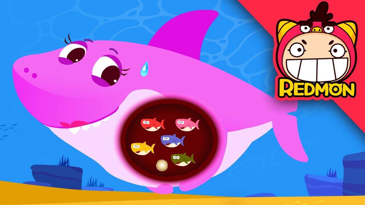 Shark Have No Bellybutton?   Baby Shark   REDMON