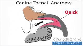 How To Trim Your Dogs Nails Kingsbrook Animal Hospital