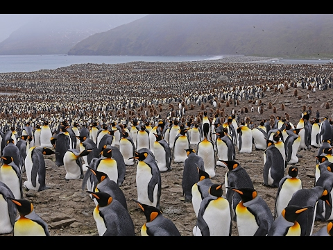Epic Falkland Islands, South Georgia Island, South Shetland Islands, Antarctica