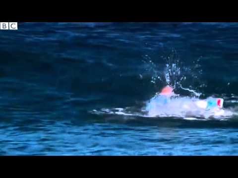 Shark attack  Mick Fanning escapes attack at World Surf League, live on TV   BBC News