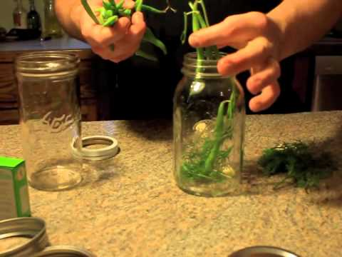 Pickling and Canning Dilly Beans