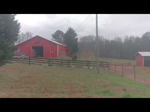 Hawk tried to get the chickens ...terrible video.