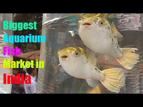 Fish Market For Aquarium Cheap Price Kurla Mumbai Aquarium