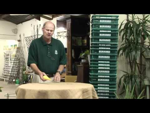 How to Store Yellow Squash From the Garden by Burkard Nurseries