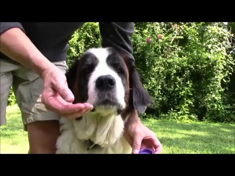 Dog's Nose Chapped?  Cracking?  Heal And Maintain, Easy and Cheap