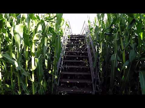 Great Vermont Corn Maze 2014