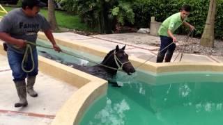 Caballo en piscina