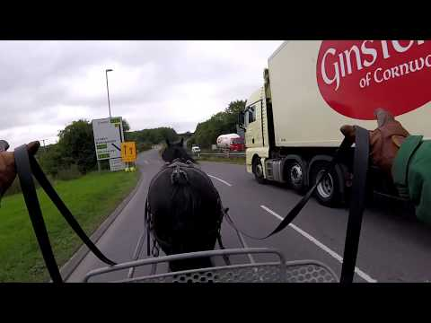 Alice in town - driving a black cob mare - Barry Hook, Horse Drawn Promotions