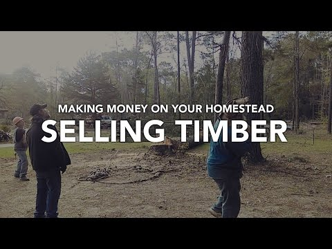 HOW TO MAKE MONEY on YOUR HOMESTEAD - Selling Timber