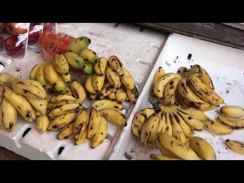 Mexico, Belize & Guatemala 2018 - Diving - GoPro HD