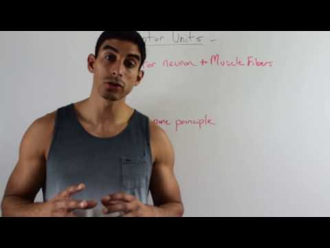 Explanation of Motor Units: ACSM Certified Personal Trainer Exam