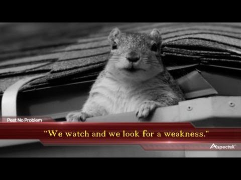 The Ugly Truth about Squirrels in the Attic