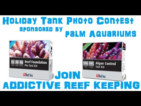 Holiday Tank Photo Contest!!! Sponsored by Palm Aquariums