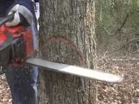 Cut Down a Tree Safely