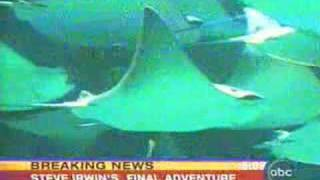 Steve Irwin S Death