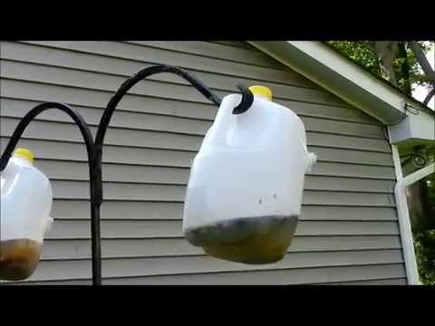 How to make a Homemade Fly Trap