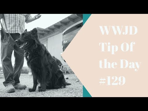 Loving your dog, What Would Jeff Do? Dog Training Tip of the Day #128