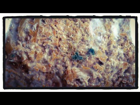 When Good Mushrooms Go Bad | Contamination in Indoor Edible Mushroom Substrate - Wine Cap, Oyster