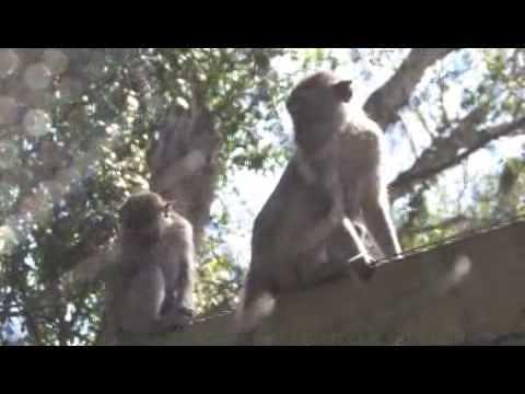 Buying a Pet Monkey