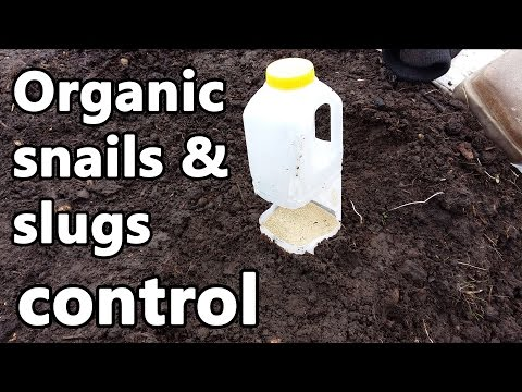Organic Snails & Slugs Control
