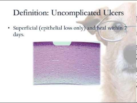 Classification of Corneal Ulcers