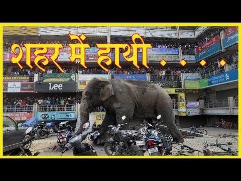 elephant attack in town //शहर में हाथी . . .