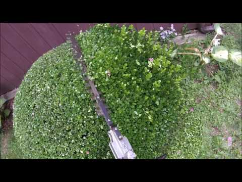 Boxwood 3-minute trim with power shears