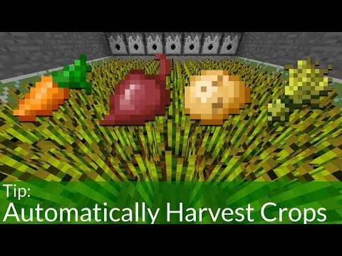 How to Automatically Harvest Crops in Minecraft Pocket Edition