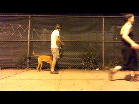 Summer Heat dog training