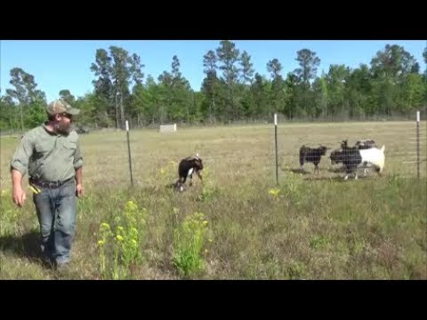 building a goat fence