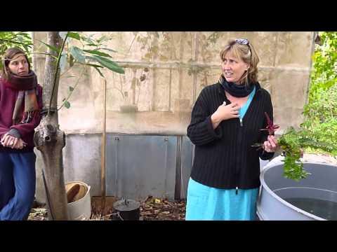 Finca Autarca   Heiltee für den Garten herstellen
