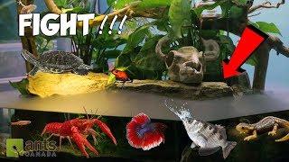 ANTS vs. WATER BEASTS!