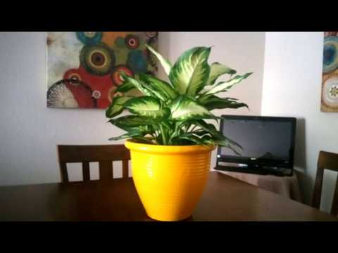 HOW TO SPRAY PAINT A FLOWER POT/ PLANTER...money saving tip