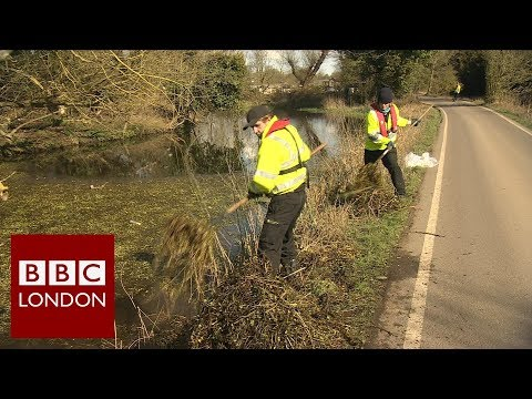Record amounts of river weed pulled from the Thames – BBC London News