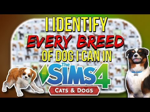 I Identify Every Breed of Dog I Can in The Sims 4: Cats and Dogs