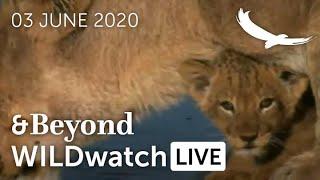 WILDwatch Live | 03 June, 2020 | Morning Safari | South Africa