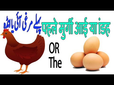 Which Came First - The Chicken or the Egg? Solved