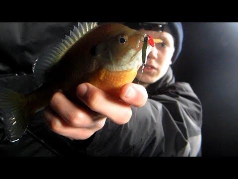 Ice fishing big baits for big Bluegill