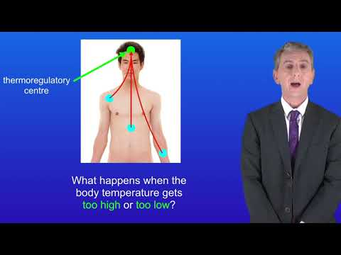 GCSE Science Biology (9-1 Triple) Thermoregulation