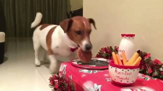 Dog Sets Up His Own Christmas Table