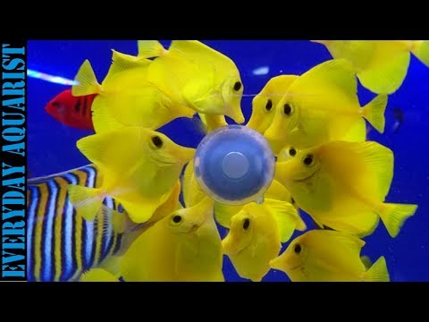 Hawaii Bans Export and Capture of Aquarium Reef Fish
