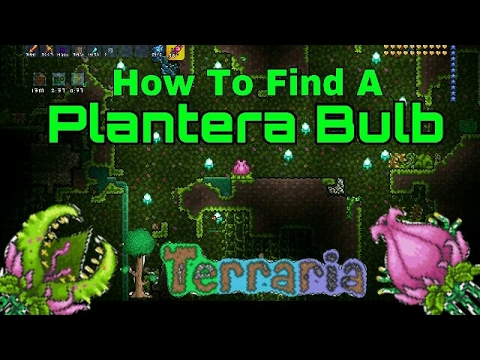 Terraria, How To Find A Plantera Bulb!