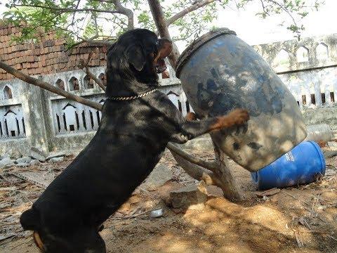 உண்ணிகளை கட்டுப்படுத்தும் முறை (Ticks And Tick Fever in Dogs in Tamil by Dr.R.Kishor Kumar M.V.SC.),