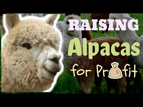Raising Alpacas For Profit