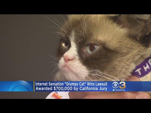 Internet Sensation 'Grumpy Cat' Wins Lawsuit