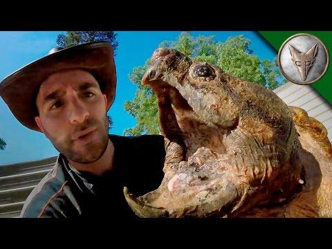 The Louisiana Dragon Pit - Dragon Tails Episode 5