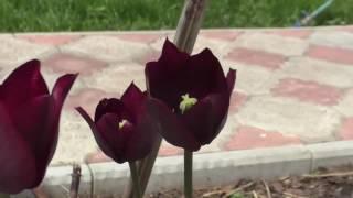 Обзор двора/Отчет о проделанной работе за май