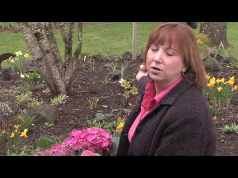 Gardening: Caring for Plants : What Flowers to Plant That Rabbits Won't Eat