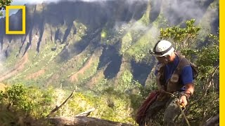 Onward: Hawaii Botanist Races to Save Rare Plants | National Geographic